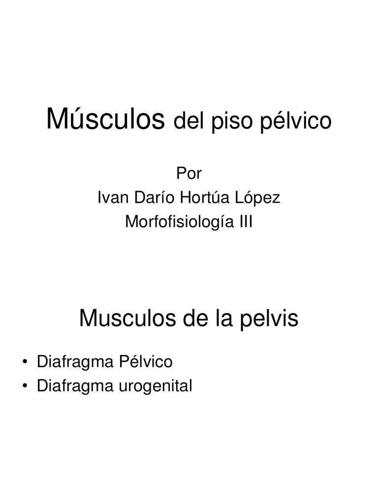 musculospelvis