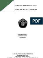 Laporan Praktikum Mikrobiologi Umum 5
