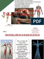 Alteración Del Sistema  Musco- Esquelético