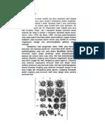Siklus Reproduksi Foraminifera