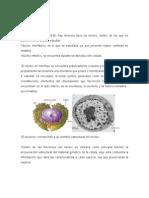 El Núcleo copia de biologia celular