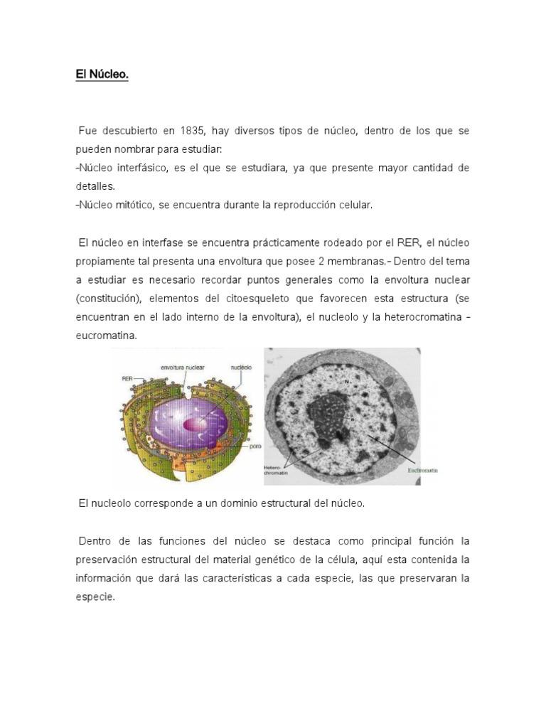 El Núcleo Copia De Biologia Celular Núcleo Celular Arn