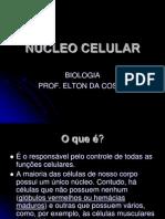 nucleo-celular2