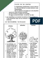 1.- Las plantas