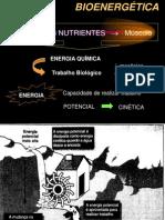 bioenergetica_1
