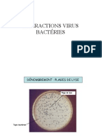Interaction Entre Virus Et Bacterie