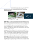 Rice Root Weevil