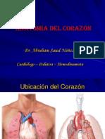 1. Anatomía del Corazón