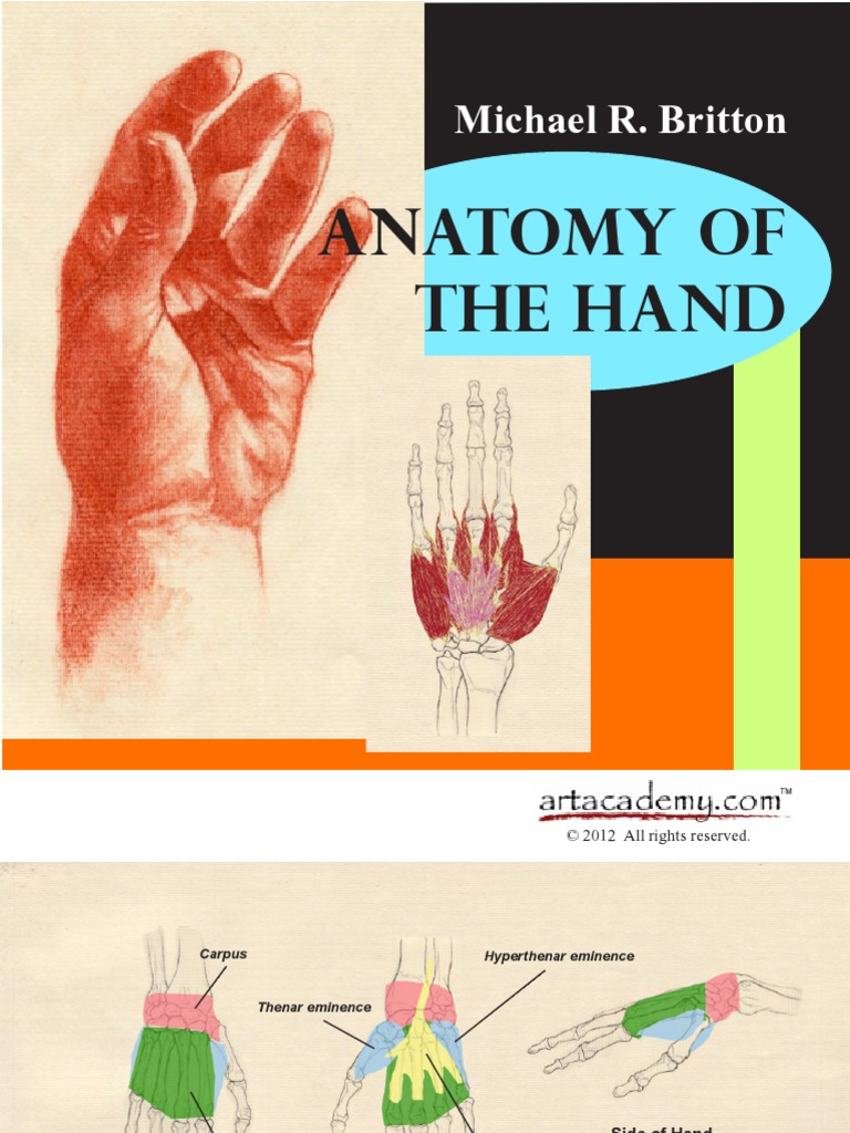 Anatomy of the Hand | Thumb | Hand