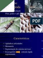 AULA Arthropoda 28. 10. 2009