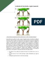 esquema-de-la-evolucion-de-las-jirafas