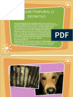 Perritos en Adopción del Antirrábico de Texcoco (Angélica Losada) Mayo 2012