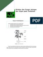 Struktur Dan Fungsi Jaringan Dan Organ Pada Tumbuhan