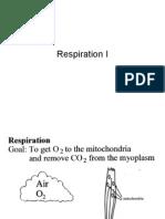 Respiration 1