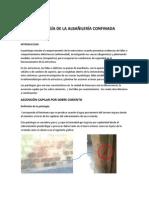 patología de la albañilería confinada