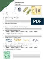 ESTUDO DIRIGIDO - vírus bactéria e fungos