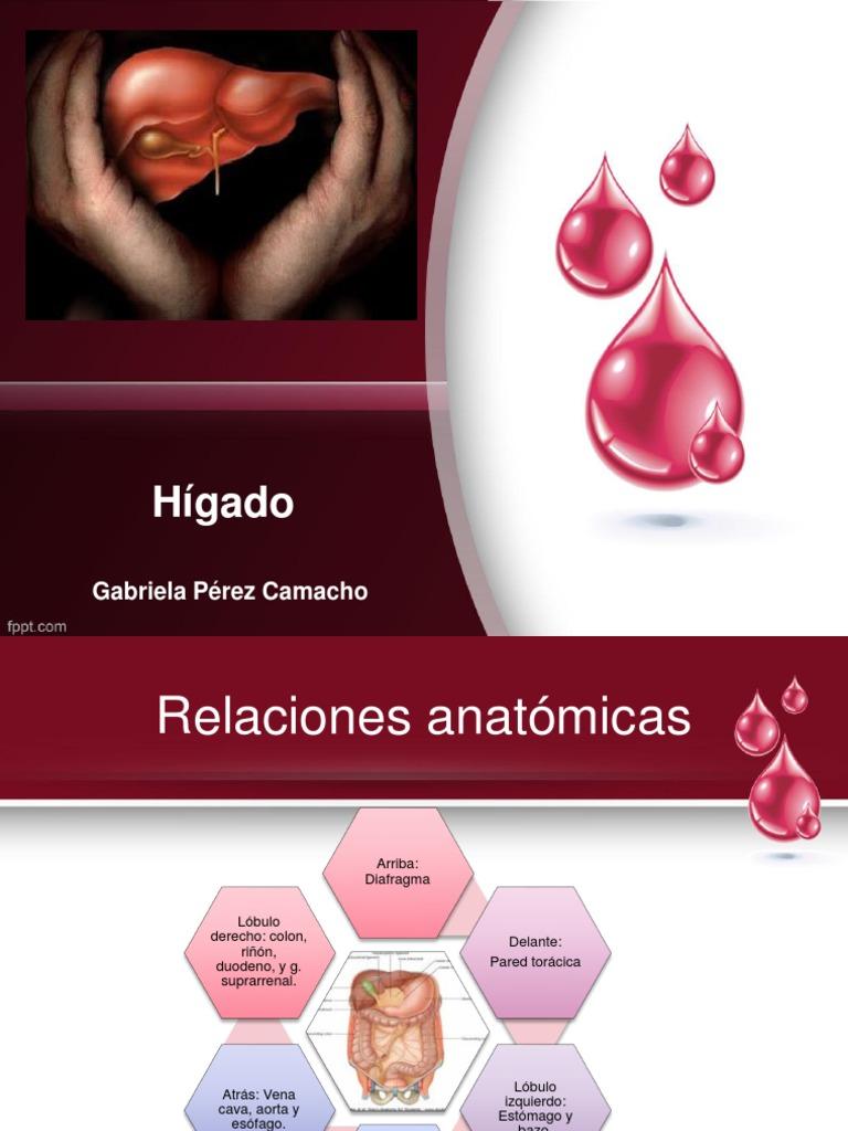 Hígado, vesicula biliar y vías biliares...