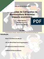 carrapatos-1225661181552908-8