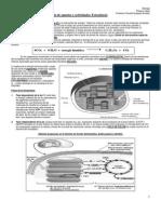 guiafotosintesis-111013101732-phpapp01