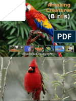 Amazing Creatures Birds