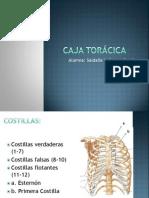 Anatomia - Caja Torácica