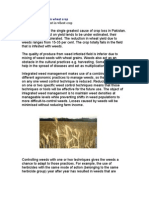 Weed Management in Wheat Crop
