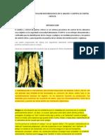Examinacion e Identificacion Micro Biologic A en El Analisis y Control de Puntos Criticos