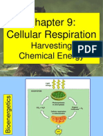 Cellular Respiration-May 3