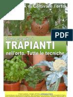 TRAPIANTI NELL'ORTO 2012-4