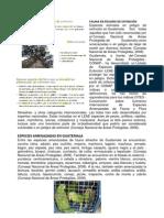 FAUNA Y FLORA EN PELIGRO DE EXTINCIÓN GUATEMALA