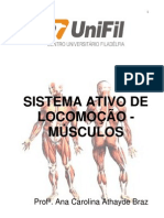 sistemamuscular-110805130045-phpapp02