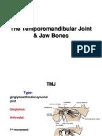 23. TMJ Jaw Bones