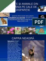 Plante Si Animale Pe Cale de Disparitie