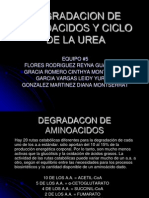 Degradacion de Aminoacidos y Ciclo de La Urea