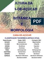 CANA -  BOTÂNICA E MORFOLOGIA