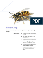 European Wasp Removal Call 0423688352 Sydney