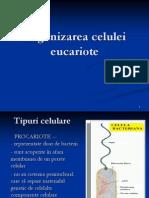 LP 4 - Eucariote +