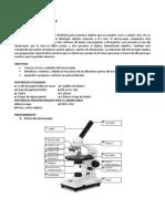 Manejo y Uso Del Microscopio