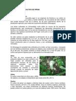 Guia-del-cultivo-de-Pipián
