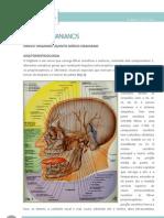 Nervo Trigemio-Anatomofisiologia