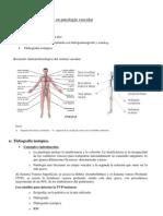 IV estudios vasculares