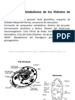 V._GLUCIDOS_METABOLISMO.pdf