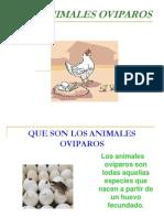Los Animales Oviparos