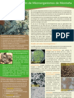 A2-02 Ficha Microorganismos VFB OK