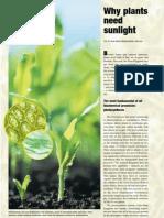 Plants Sunlight