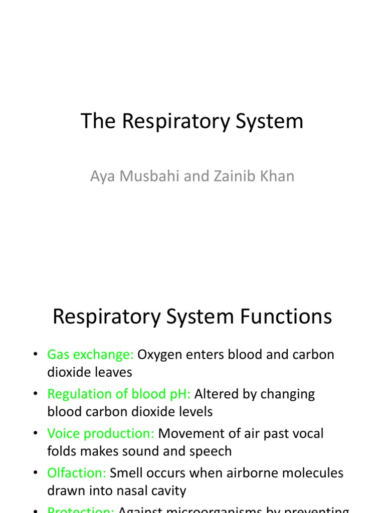 The Respiratory System Lung Respiratory System
