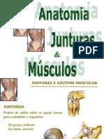 Anatomia Humana Junturas e Musculos