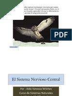 El Sistema Nervioso Central [Modo de ad