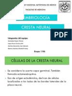 crestas neurales 1106