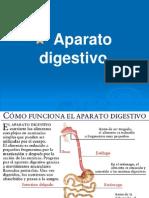 aparatodigestivoembrio07-090922190559-phpapp02
